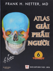 Atlas Giải Phẫu Người – Frank H. Netter, MD